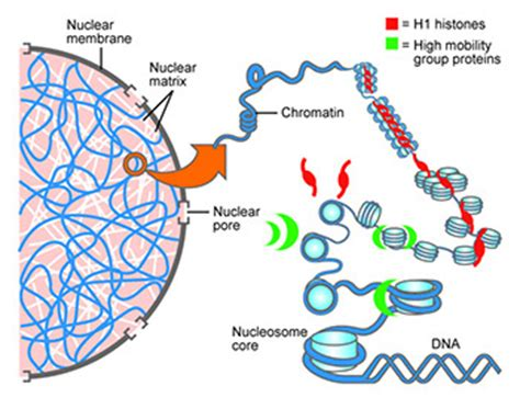 Research on single cell protein