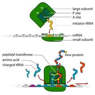 Research Single-cell sequencing provides clues about the